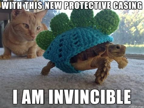 Funny Turtle Memes - another funny meme furry feathery fins pinterest