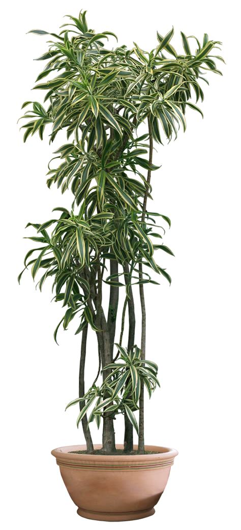 Indoor House Plant plant png 10 by digitalwideresource on deviantart