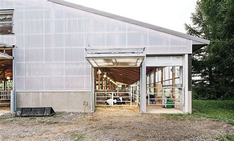 modern barns the dairy barn redesigned barn modern farmer and cow