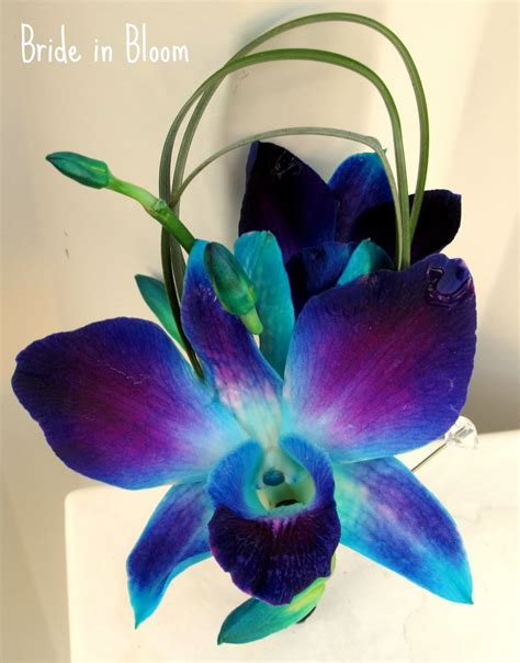 blue orchid tattoo in bloom blue orchid bridal bouquets