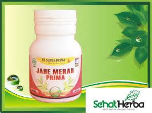 Sedia Kapsul Dan Simplisia Herbal obat herbal jahe merah sehatherba
