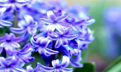 wallpaper bunga yang cantik gambar wallpaper bunga cantik indah caption instagram