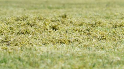Rasen Vertikutieren Wann by Rasen Vertikutieren Warum Wann Wie Oft Plantura