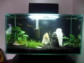 indoor d 233 cor ideas for aquarium l with lighting ideas