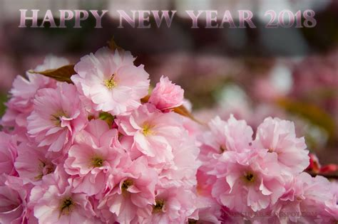 new year flower fair 2018 happy new year 2018 flowers picture