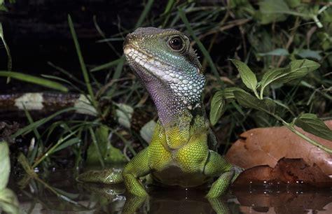 heat  uvb lighting  pet water dragons