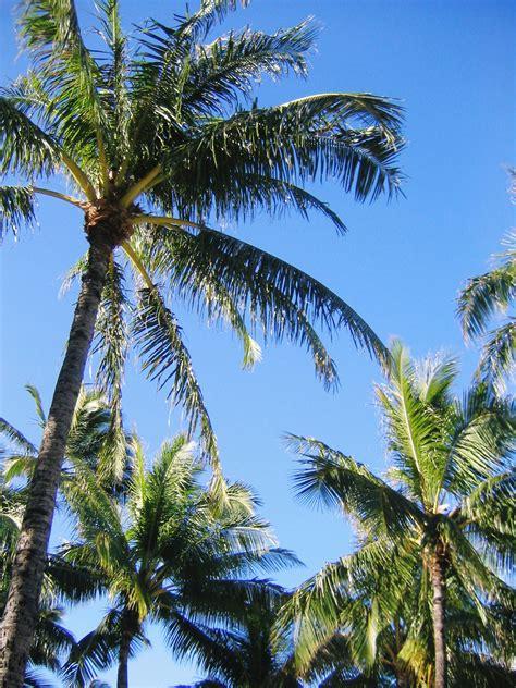 ケオニで朝食を 旅行 aloha stayle yahoo ブログ