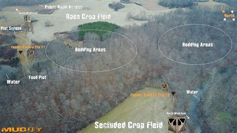 best time to feed best time to feed deer with feeder wiring diagrams wiring diagrams