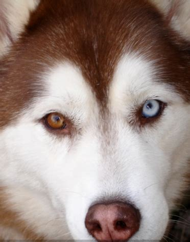 dogs with different colored what are dogs with different colored called daily