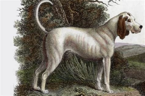 extinct dogs top 10 extinct breeds of dogs wonderslist