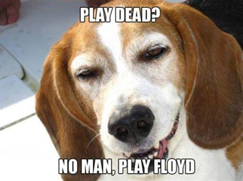 10 Dog Meme - stoner dog meme 20 pix of the funny meme based off 10