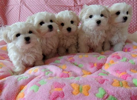 pet shops that sell puppies near me free puppies puppies for sale free puppy puppies for adoption breeds picture