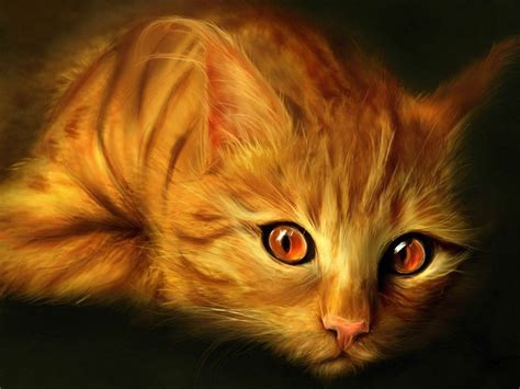 cat eyes wallpaper hd brown eyes cats hd wallpapers beautiful pictures photos