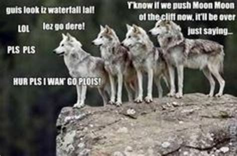 Wolf Pack Meme - moon moon the wolf on pinterest saga memes and love moon