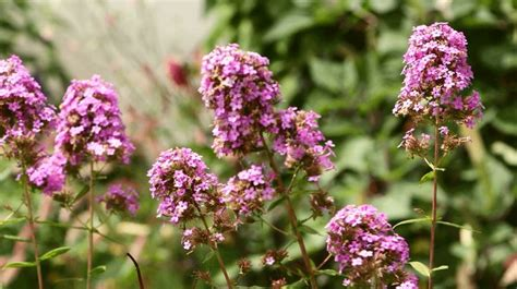flowering perennials for shade gardens 1000 images about gardening outdoors on