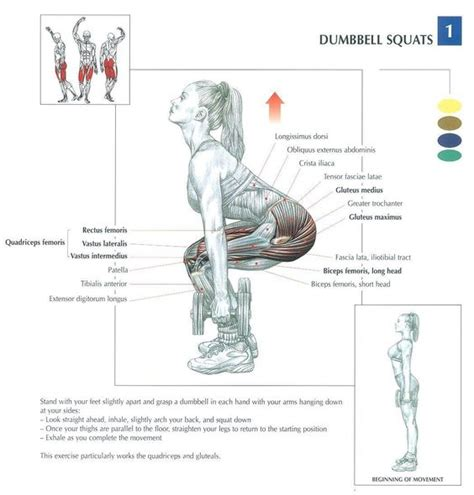 dumbbell exercises diagrams health and fitness weight and anatomy on