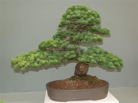 Bonsai Grow Light by Bonsai Grow Lights And Ceramic Figurines For Sale