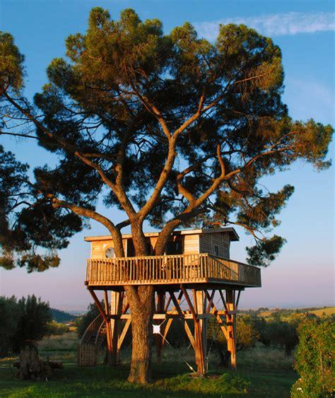 amazing tree amazing ecoloft a house in the trees enpundit
