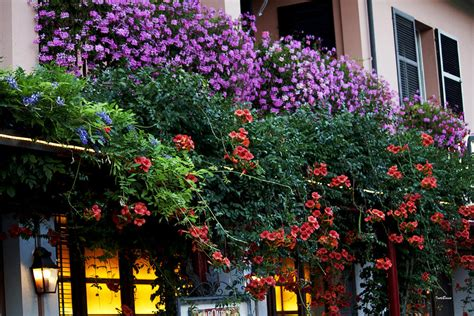 balcony flowers balcony with many flowers photograph by ivete basso
