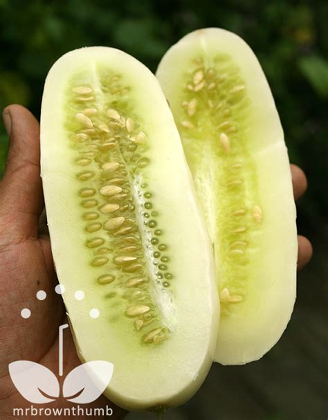 cucumber seeds cucumber white from burpee seeds mrbrownthumb