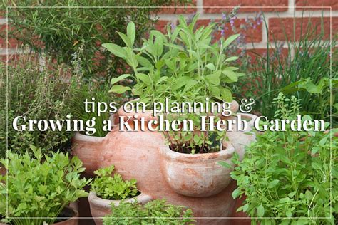 herb garden basics diy gardening archives the herb exchange