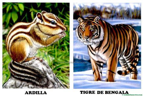 imagenes realistas de animales dibujos de animales salvajes para imprimir web del maestro