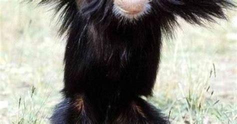 Sexy Monkey Meme - sexy monkey meme slapcaption com funny things