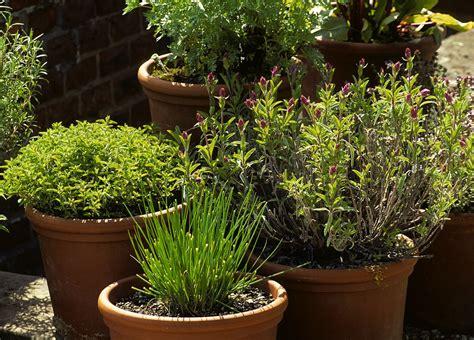 Plantation Herbes Aromatiques Jardiniere by Les Erreurs 224 233 Viter Dans La Culture Des Plantes Aromatiques