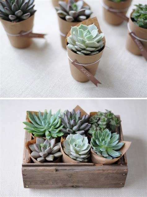 diy succulents signs of spring ebb flow