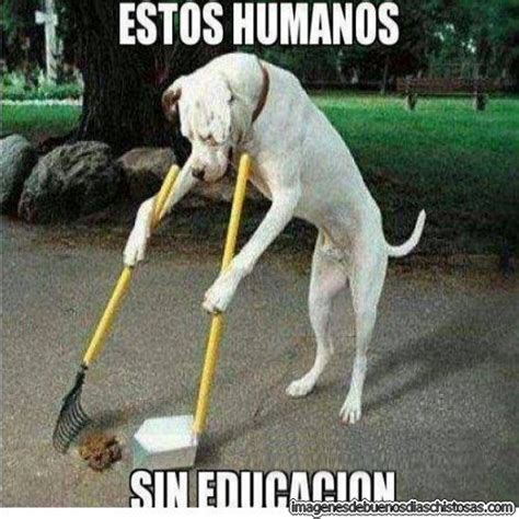 im 225 genes de animales im 225 genes de perros chistosos perro pitbull imagenes divertidas imagenes graciosas las