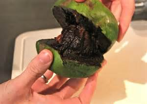 Garage Kitchen Cabinets have trade black sapote chocolate pudding fruit seeds