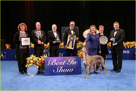 purina show who won best in show at the purina national show 2016 photo 3815154