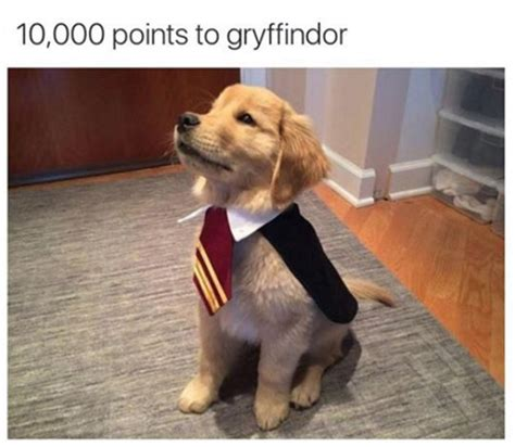 harry potter puppy puppy potter the meta picture