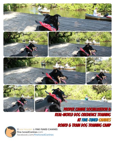 rottweiler puppies naples fl the rottweiler mix and kayaks jpg tuned canines photos