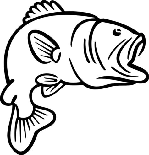 coloring pages bass fish bass drawing clipart best