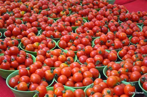 tomato farming in nigeria comprehensive business plan ebook