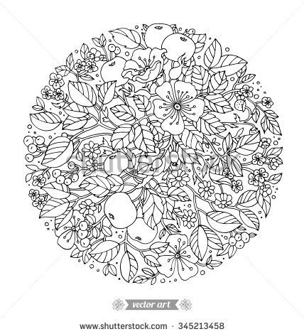 apple coloring pages for adults forest flowers wild berries apple fruits stock vector