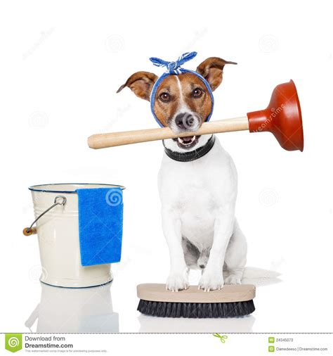 is a dogs clean cleaning stock photos image 24345073