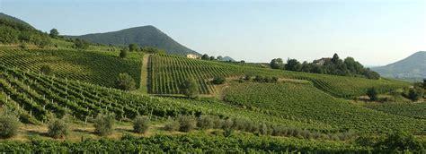 colli euganei strada vino colli euganei vino olio e prodotti tipici