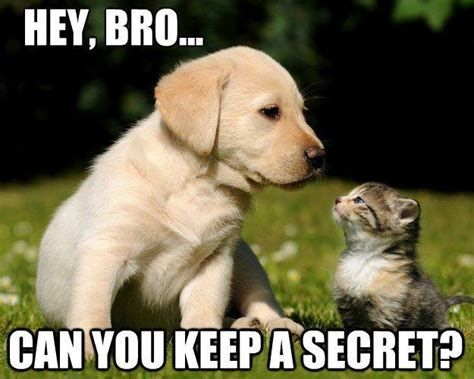 talking puppies puppy and kitten talking about secrets it s a dogs world pintere
