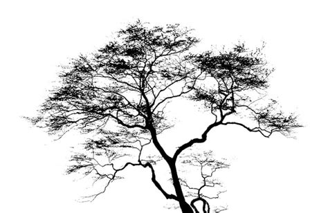 black and white tree images tree image black and white search tree graphics