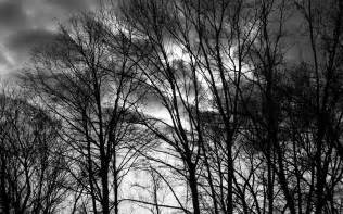 black and white trees by knauhsty on deviantart