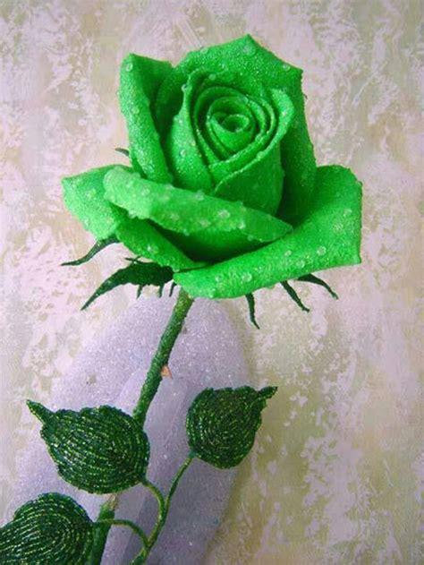 Jual Bibit Bunga Mawar Di Yogyakarta jual benih biji bibit bunga mawar green import di
