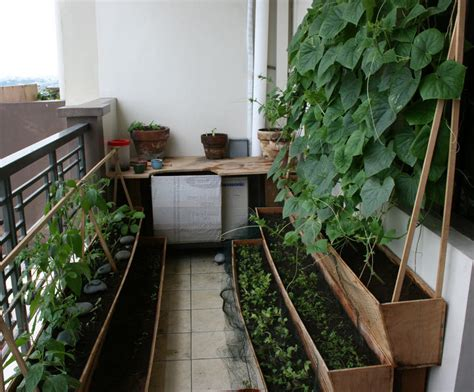 fresh veges from your balcony vegetable garden design