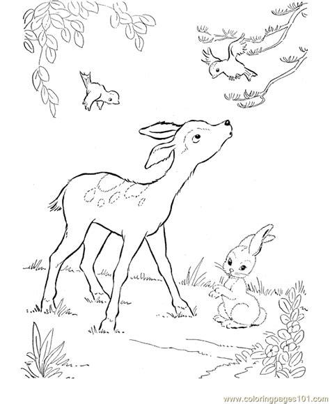 coloring pages of cute deer coloring pages cute deer animals gt deer free printable