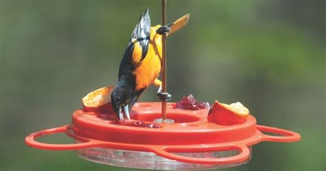 wild birds unlimited best place to hang oriole feeder