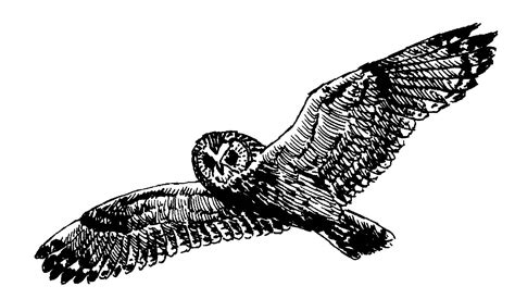 flying owl clipart flying owl clipart black and white clipart panda free