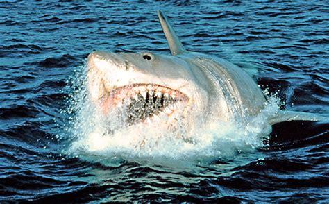baby shark movie 17 chilling shark movies ew com