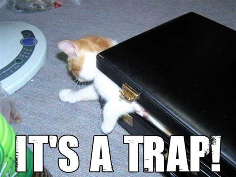 Cat Trap Meme - index of gifs memes 03