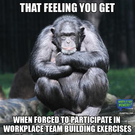 Monkey Meme - funny monkey memes related keywords funny monkey memes